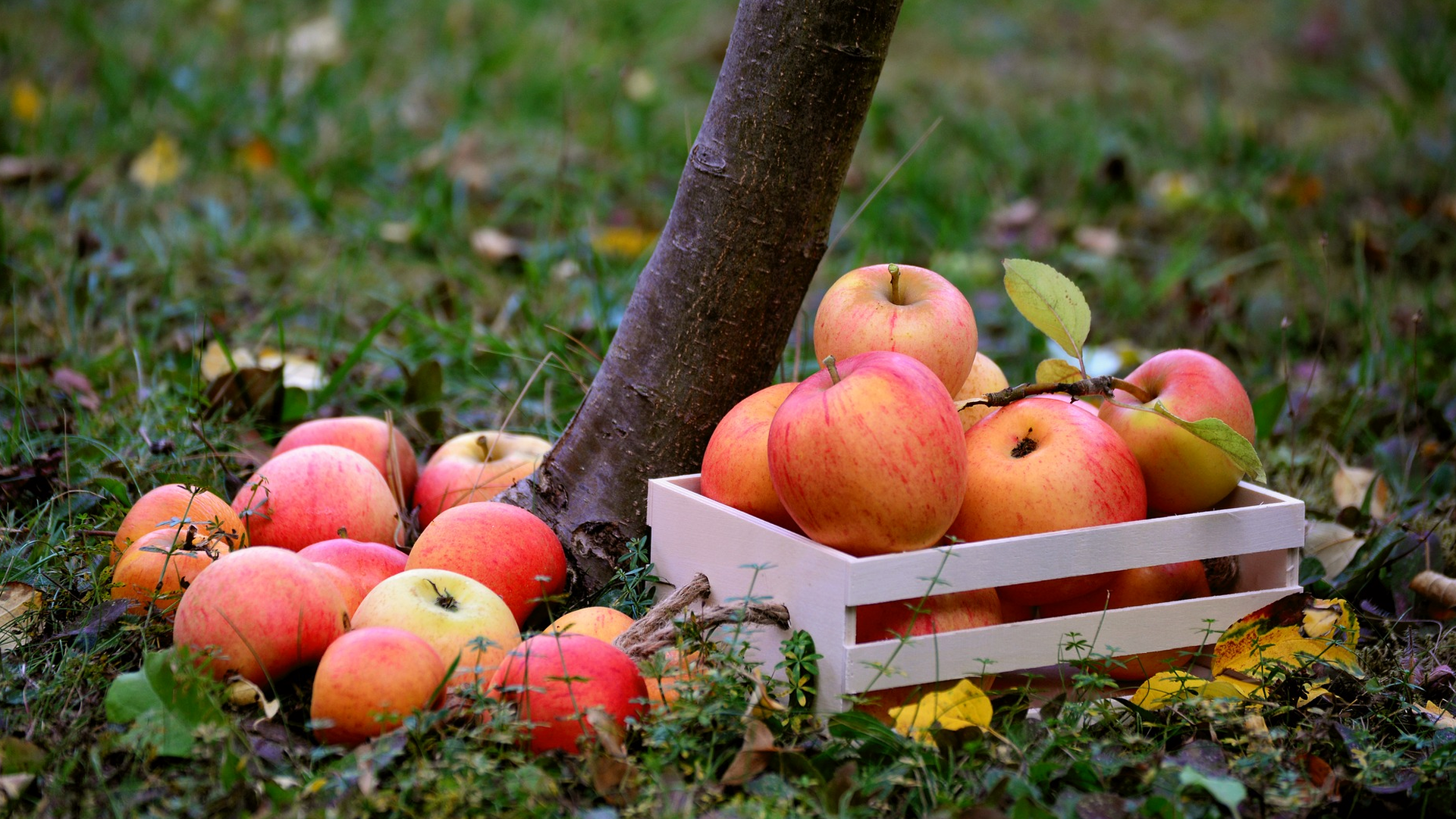 Steinsel apples Luxembourg